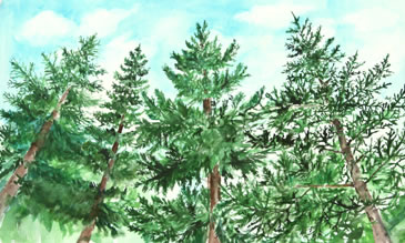 at one childrens book pine trees