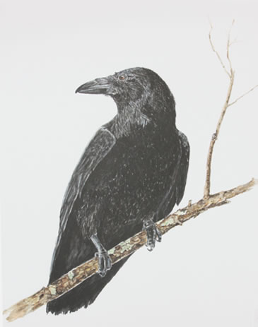 print crow The sentinel